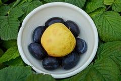 Большое яблоко и сливы сини в белом шаре на листьях Стоковое фото RF