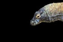 большое komodo дракона Стоковое Изображение RF