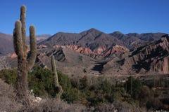 большое pucara гор кактуса Стоковая Фотография RF