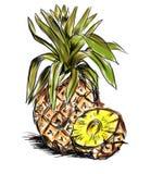 большой ананас иллюстрация вектора