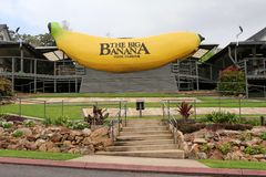 Большой банан на Coffs Harbour, NSW, Австралии стоковое фото