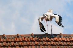 Большой белый аист на представлениях крыши Стоковое Фото