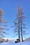 Большой вал лиственницы Стоковое Изображение RF