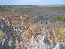 большой верхний tsingy взгляд Стоковая Фотография