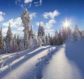 Большой взгляд зимы прикарпатских гор с снегом покрыл ель Стоковое Изображение