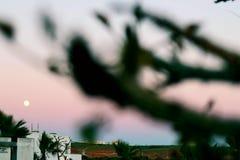 Большой взгляд луны в заходе солнца стоковая фотография