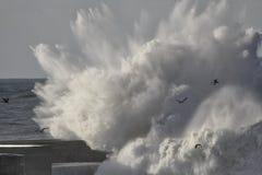 Большой выплеск волны моря Стоковые Фотографии RF