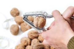 Большой грецкий орех в схватах для гаек Стоковое Изображение RF