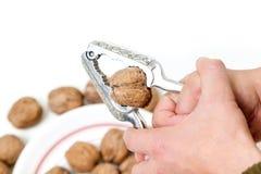 Большой грецкий орех в схватах для гаек Стоковая Фотография RF