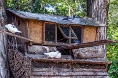 Большой дом птицы голубя на дереве в природном парке или зоопарке стоковое фото