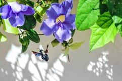 Большой жук опыляет во время подавать с флористическим нектаром фауна Стоковое Изображение