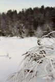 Большой заморозок на траве стоковые изображения