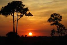 большой заход солнца кипариса Стоковые Изображения RF
