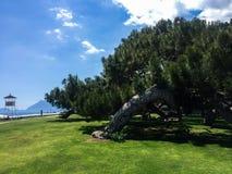 Большой зеленый вал на пляже стоковые изображения