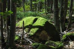 большой зеленый утес мха Стоковое Изображение