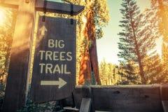 Большой знак следа деревьев Стоковые Изображения RF