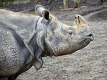 большой индийский rhinoceros 7 Стоковые Изображения RF