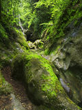 большой камень мха стоковая фотография rf