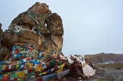 Большой камень падуба Стоковая Фотография RF