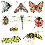 Большой комплект насекомых акварели на белой предпосылке стоковое изображение rf