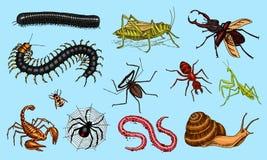 Большой комплект насекомых Винтажные любимчики в доме Улитка скорпиона жуков черепашок, паук хлыста, саранчи муравья стоножки чер иллюстрация вектора