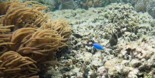 Большой коралловый риф астролябии: Остров Dravuni Стоковые Фото