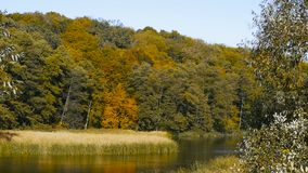 Большой красивый ландшафт осени с озером и деревьями видеоматериал