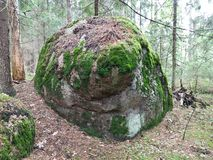 Большой круглый камн-булыжник во мхе леса если покрашено на ем нос, глаза и улыбку Живя изображение природы стоковые фотографии rf