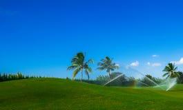 Большой курс 7 Кейман-гольфа стоковые фото