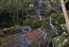 большой национальный парк гор закоптелый Стоковая Фотография