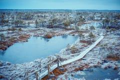Большой национальный парк Kemeri заболоченных мест болота, Латвия стоковое фото