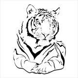 Большой одичалый кот Стоковое фото RF