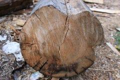 Большой отрезок старой древесины в фабрике Стоковая Фотография RF