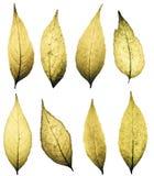 большой пакет листьев grunge Стоковые Изображения