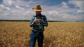 Большой палец руки вверх по счастливому фермеру проверяя плантацию пшеницы видеоматериал