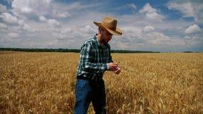 Большой палец руки вверх по счастливому фермеру проверяя плантацию зерна видеоматериал