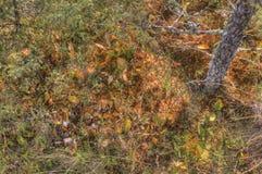 Большой парк штата трясины, Минесота стоковая фотография