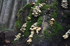 Большой пень покрытый с много грибами и мха стоковые фото