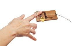 Большой пец руки в mousetrap Стоковое фото RF