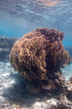 большой пожар коралла bush Стоковое Изображение RF