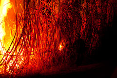 большой пожар Стоковые Изображения RF