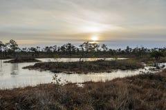 Большой променад в декабре, национальный парк трясины Kemeri Kemeri, Ла стоковые фотографии rf