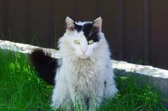 Большой пушистый запятнанный кот сидит в зеленой траве против коричневой стены снаружи стоковые изображения