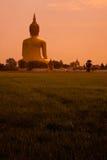 большой рис поля Будды Стоковые Изображения