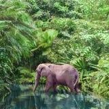 Большой розовый слон идет вдоль канала живописного реки стоковое фото rf