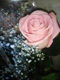Большой свет - роза и hypsophila пинка Стоковое Фото