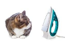 Большой серый кот и утюг Стоковое Изображение