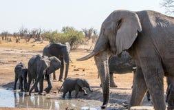 Большой слон на переднем плане с небольшим табуном на waterhole на заднем плане стоковая фотография rf