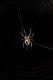Большой спайдер в своей сети Стоковая Фотография RF