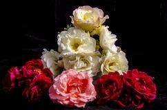 Большой стог красных белых розовых роз Стоковое фото RF